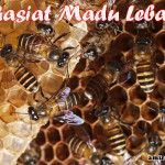 Khasiat Madu Lebah Bagi Manusia