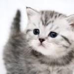 Tips Ringkas Penjagaan Kucing Peliharaan
