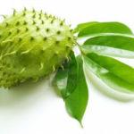 Khasiat Daun Durian Belanda Yang Anda Perlu Tahu